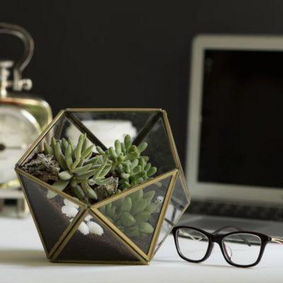 Polyhedron Terrarium